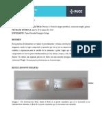 T-Pinargote-informe 2 (Frotis de sangre periférica)
