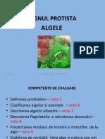 Regnul Protista- algele