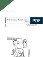 Dermatologia I