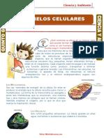 Organelos-Celulares OCTAVO