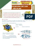 Clasificación-de-las-Células-para-Quinto-Grado-de-Primaria.doc