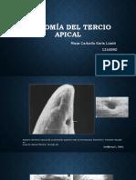 Anatomia del tercio apical..pptx