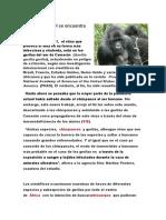 El origen del VIH se encuentra en los gorilas