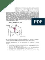 Anatomia torax