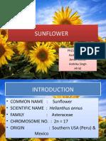 SUNFLOWER 2.pptx
