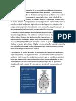 glandulas mamarias