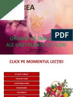 Lectie_flori
