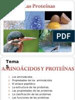 aminoacidos-proteinas