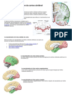 Vascularisation-du-cortex-cérébral