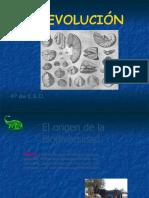 presentacinevolucinteoraspruebasyespeciacin-140711061101-phpapp01.pdf