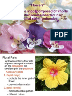 Botany 102 ( Lab ) - Flowers 2