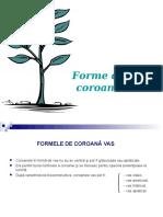 Forme_de_coroana_Vas_si_Palmete.ppt