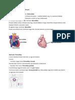 38. A szívfal szerkezete és a szívburok