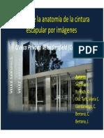 Anatomía Cintura escapular.pdf