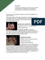 Tipo de murciélagos de Ecuador