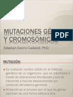 Mutaciones1-aberraciones cromosomicas.pdf