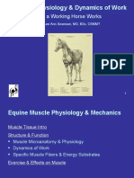 Muscle Physiology & Dynamics of Work