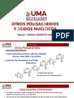 Polisacáridos - ácidos nucléicos