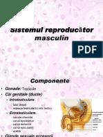 LP_10_Genital_masculin.pdf