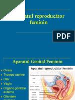 LP_11_Genital fem.pdf