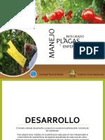 Fenología del Tomate