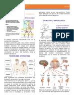 Fisio2-endocrino-clase 1y2