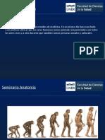 Anatomia-de-columna