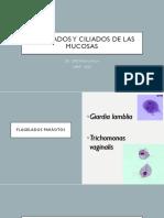 PARASITOLOGIA - CLASE 2.1 - FLAGELADOS MUCOSOS