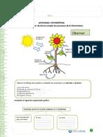 fotosintesis 6