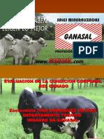 CONDICION CORPORAL DEL GANADO vs MANEJO NUTRICIONAL DEL GANADO