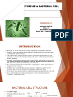 BACTERIA PPT