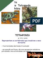 12t.-aula-amphibia-2014.pdf