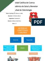 Angiología de la cabeza y cuello.pdf