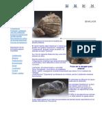 Bibalvos. Guía didáctica de fósiles de sureste