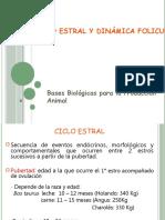 clase_ciclo_estral_