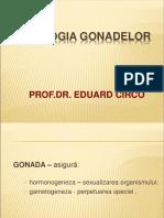 Patologia gonadelor