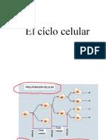 mitosis3