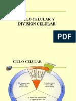 mitosis4 CICLO CELULAR