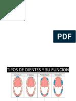 GUIA DE EDUACIÓN EN SALUD ORAL