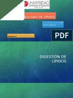 Metabolismo de Lipidos (1).pptx · versión 1.pptx