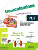 diapositivas de catecolaminas