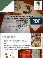 ORGANIZACIÓN DE LAS COLECCIONES CIENTÍFICAS DE UN HERBARIO