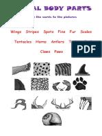 Animals Body Parts Fun Activities Games 19125