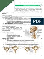 02 - Pescoço.pdf