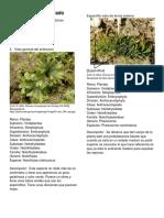 Glosario Ilustrado Prueba.pdf