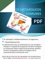 CAMINOS METABOLICOS COMUNES