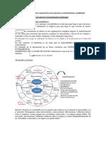 Tema 3 La investigación comercial en un entorno cambiante