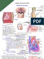 Medsurg Cardio Ana&Physio
