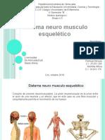 Sistema neuromusculo esquelético