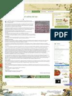 Claves para el éxito del cultivo del ajo